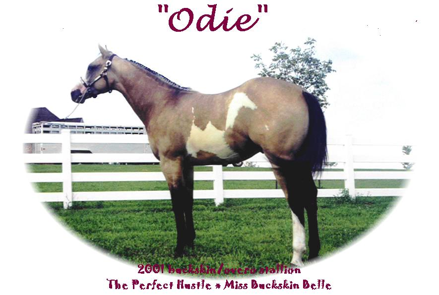 odie-yearling.jpg